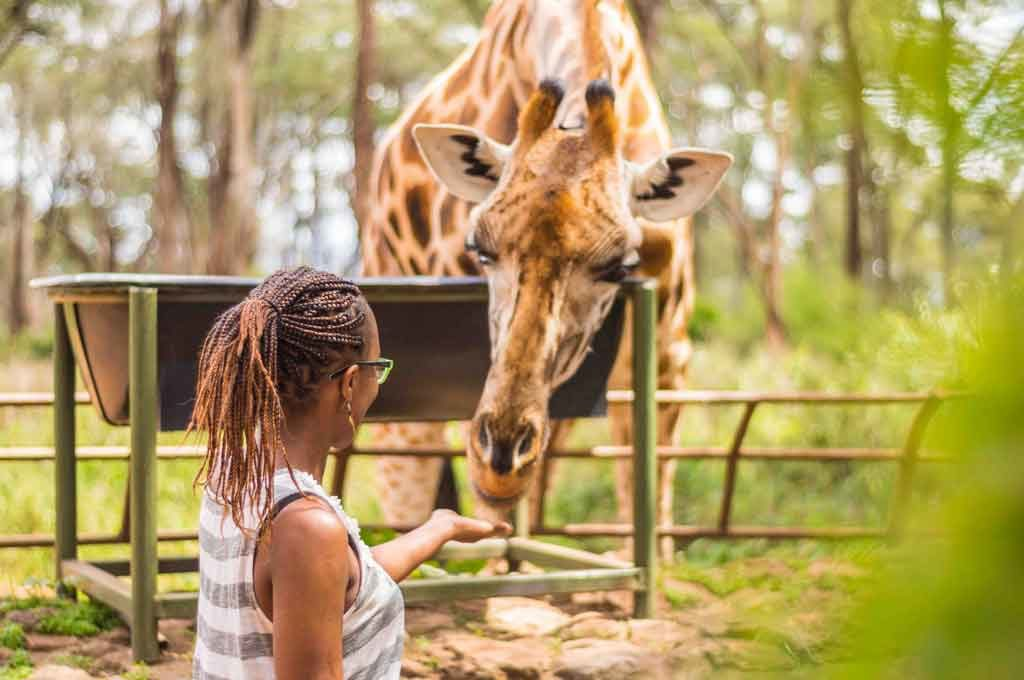 Our Stories - African Fund for Endangered Wildlife - Giraffe Centre